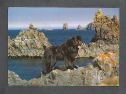 ANIMAUX - ANIMALS - NEWFOUNDLAND DOGS FAMOUS FOR THEIR LOYALTY - 17 X 12 Cm  6¾ X 4¾ Po - PHOTO M & B POSTCARDS - Autres