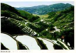 CPM - Banave - Les Jardins En Terraces - Philippines