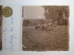 """GRECE - Macédoine - GOUMENISSA ( Gumentzé ) - """" Battage Récolte  """" - Rare Plaque De Verre Stéréoscopique  - 1917 - - Glass Slides"""