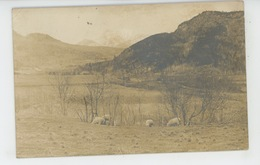 U.S.A. - WASHINGTON - HURRICANE (carte Photo Champ Avec Moutons écrite En 1917) - Etats-Unis