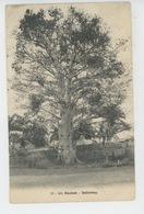 AFRIQUE - DAHOMEY - Un Baobab - Dahomey