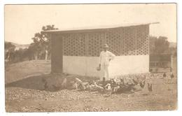 Carte Photo Nouvelle Calédonie Ou TAHITI- Poullailler - Personne Avec Casque Colonial - New Caledonia