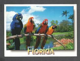 ANIMAUX - ANIMALS - BIRDS OISEAUX  PARROT JUNGLE FLORIDA PARROTS - PERROQUETS - 18 X 13 Cm  7 X 5 Po - PHOTO ALAN SCHEIN - Oiseaux