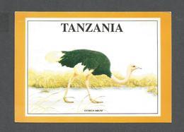 ANIMAUX - ANIMALS - TANZANIA AFRICA - OSTRICH MBUNI - AUTRUCHE - Oiseaux