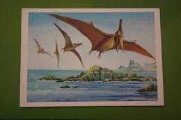 Pteranodon / Pterosaurs   - Dinosaur Serie - Old USSR Postcard 1983 - Altri