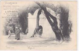 Algérie - Blida - Marabout Du Bors Sacré - Blida
