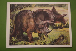 Triceratops   - Dinosaur Serie - Old USSR Postcard 1983 - Altri