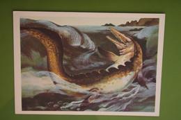 Mosasaurus   - Dinosaur Serie - Old USSR Postcard 1983 - Altri