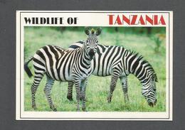 ANIMAUX - ANIMALS - WILDLIFE OF TANZANIA AFRICA - ZEBRAS - ZÈBRES - PHOTO BY DINO SASSI - Zèbres