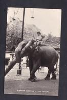 Sri Lanka Ceylon Elephant Carrying A Log ( Porte Un Tronc D'arbre ) - Sri Lanka (Ceylon)
