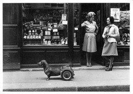 "Robert DOISNEAU - PHOTOGRAPHE - ""DOG ON WHEELS"" - 1977 - BELLE EDITION ARTISTIQUE; PORTOFOLIO -1983. - Photographs"