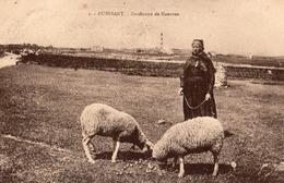 Gardienne De Moutons - Ouessant
