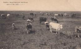 Harbin China, 'Sunrise Pastures' Cows Graze In Pasture Outside City, Nagoya Hotel Stamp, C1920s Vintage Postcard - China
