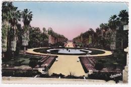 ALGER - Le Jardin D'Essai - Algiers
