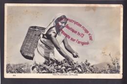 Q1531 - Tea Plucker - CEYLON - Sri Lanka - Sri Lanka (Ceylon)