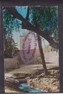 Q1549 - BISKRA - La Mosquée - Algérie - Biskra