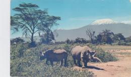 Uganda Postcard Posted 1960 To Austria - Stamps With Animals (T11-23) - Uganda (1962-...)