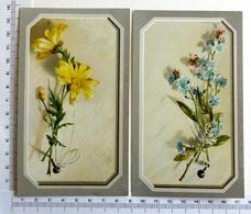 2 CHROMOS LITHOGRAPHIES  .........FLEURS ...MARGUERITE...MYOSOTIS - Vieux Papiers