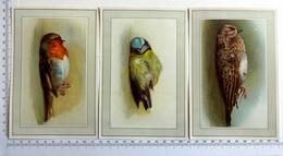 3 CHROMOS LITHOGRAPHIES  ....GRAND FORMAT ... OISEAUX...MÉSANGE...ROUGE GORGE...GRIVE - Vieux Papiers