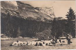 74    Plaine-joux  Scene Pastorale - Otros Municipios