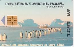 Télécarte TAAF FSAT - Manchots Empereurs ... Pingouin Penguin Pinguin ... - TAAF - Franse Zuidpoolgewesten