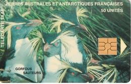 Télécarte TAAF FSAT - Gorfous Sauteurs ... Pingouin Penguin Pinguin ... - TAAF - French Southern And Antarctic Lands