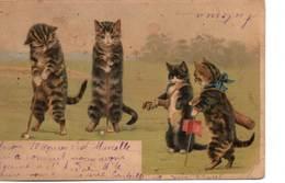 Chats Au Golf - Cats