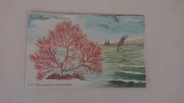 Carte Postale Ancienne Les Algues Marines, N°3 Plocamium Coccineum - Pescados Y Crustáceos