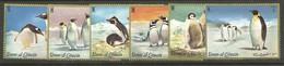 Pinguin - Umm Al-Qiwain