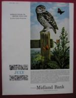 MIDLAND BANK -ORIGINAL 1965 MAGAZINE ADVERT. LITTLE OWL - Other