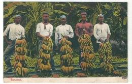PANAMA   ( Amerique Centrale )  Ramassage Et Vendeurs De Bananes . - Panama