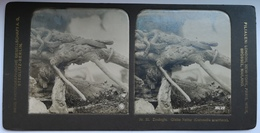 PHOTO STEREOSCOPIC STEREO ZOOLOGIE GLATTE NATTER ( CORONELLA AUSTRIACA ) , BERLIN - Stereo-Photographie