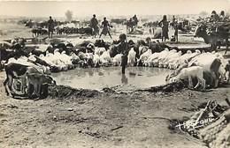 Pays Div -ref T156- Tchad - Abéché - Chevres A L Abreuvoir - Chevre - Goats - Goat - - Chad