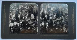 PHOTO STEREOSCOPIC STEREO BOTANIK LUFFA CYLINDRA LIEFERT LUFFASCHWÄMME - Stereo-Photographie