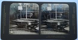 PHOTO STEREOSCOPIC STEREO BOTANIK VIKTORIA  REGIA DIE KÖNIGIN DER SEEROSEN - Stereo-Photographie