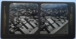 PHOTO STEREOSCOPIC STEREO BOTANIK JUNGE WEISSE LOTOSBLUMEN UND NYMPHÄACEEN - Stereo-Photographie