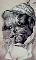 Cpa BEAU PORTRAIT De CHIEN HABILLE, Offrant Une ROSE, 1903 , Casquette , Dressed Dog Cap Hat, EARLY PC - Animaux Habillés