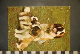 CP, Chiens, Trois Chiens A Une Fenetre, Labrador - Chiens