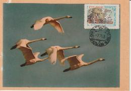Russie Carte Maximum Oiseaux 1961 Cygnes 2379B - 1923-1991 UdSSR
