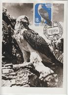Russie Carte Maximum Oiseaux 1964 Faucon 2826 - Maximumkaarten