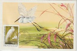 Russie Carte Maximum Oiseaux 1968 Hérons Blancs 3417 - 1923-1991 URSS