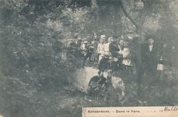 CPA - Belgique - Brussels - Bruxelles - Schaerbeek - Dans Le Parc - Schaarbeek - Schaerbeek