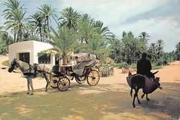 Tunisie - GABES - Le Café De La Cascade - Calèche - Attelage De Cheval - Ane - Tunisia
