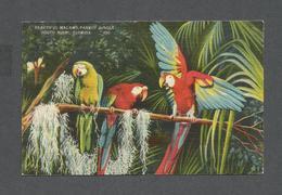 ANIMAUX - ANIMALS - BIRDS - OISEAUX  PARROT JUNGLE FLORIDA  PARROTS - PERROQUETS - MACAWS - Oiseaux