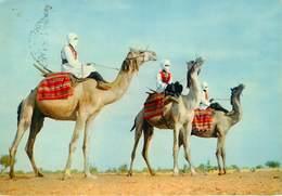 Sahara Occidental - Sahara Espagnol - Méharistes - Santé - Publicité Plasmarine - Laboratoires La Biomarine - Dieppe - Western Sahara
