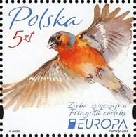 Poland 2019 Fauna Birds 1v MNH - Oiseaux