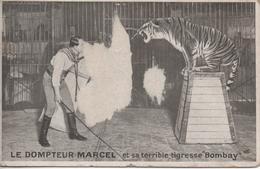 Le Dompteur Marcel Et Sa Terrible Tigresse Bombay Abimee - Circus
