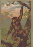 CPA (image Bon Point)orang Outang - Vieux Papiers