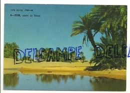 Israel. A-Tur. Oasis Du Désert Du Sinaï Près De La Baie Du Canal De Suez 1973. Palphot - Israel