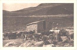 AD ANDORRE - 20 - PAS DE LA CASA - Vacas - Animée - Belle - Andorra